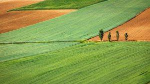 Avaliação prévia da qualidade do solo pode poupar tempo e dinheiro ao evitar escolha de solo desvantajoso para a produção. Foto: Gaetano Cessati/Unsplash