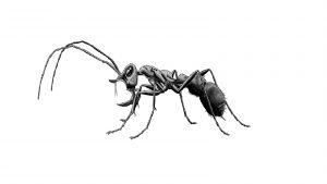 """Conhecidas como """"hell ants"""", as formigas da subfamília Haidomyrmecinae possuíam mandíbulas grandes em relação ao corpo e um chifre na cabeça; viveram há 100 milhões de anos e foram extintas ao mesmo tempo em que os dinossauros. Imagem: Blog Nix Draws Stuff/Reprodução"""