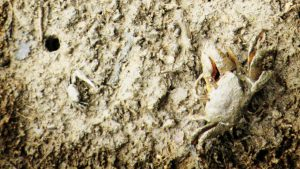 Formas de hidrocarbonetos ameaçam mangues, considerados o berçário da baía do Litoral do Paraná. Na foto, mangue em Antonina. Foto: Cleber Machado/Flickr, 2011
