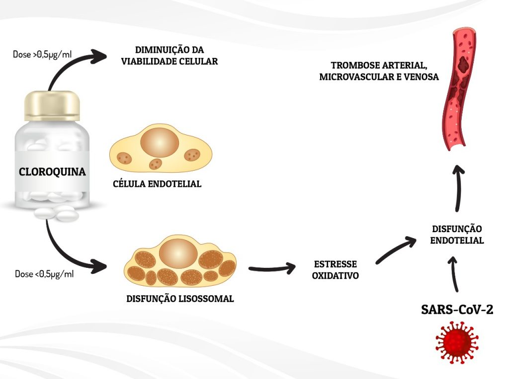Efeitos de diferentes concentrações de cloroquina nas células endoteliais: nas doses maiores, substância reduz viabilidade celular. Nas menores, causa estresse oxidativo e cria condições para a formação de trombos. Ilustração: Aspec/UFPR